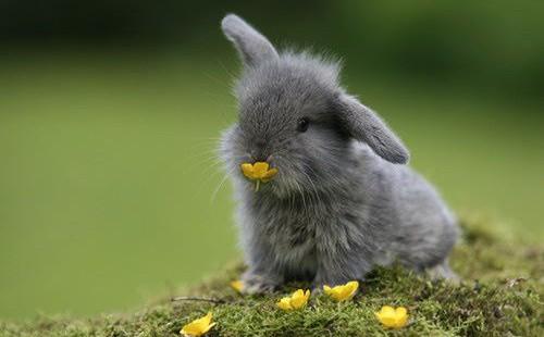Cute-Bunny-4